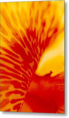 Metal Print featuring the photograph Canna Lilly by Michael Hoard