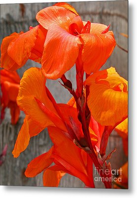 Canna Lilly Up Close Metal Print by Kenny Bosak