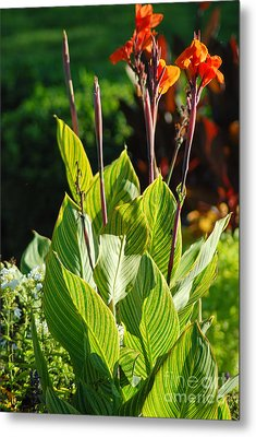Canna Lily Metal Print by Optical Playground By MP Ray
