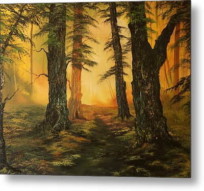 Cannock Chase Forest In Sunlight Metal Print by Jean Walker