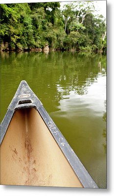 Canoeing The Macal River In Jungle Metal Print
