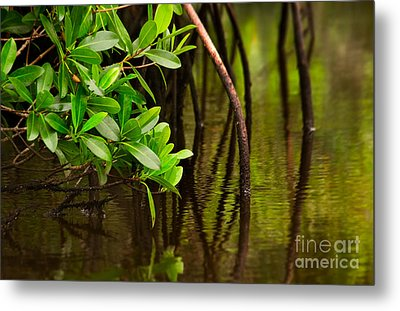 Canoeing Through Quiet Mangroves Metal Print by Matt Tilghman