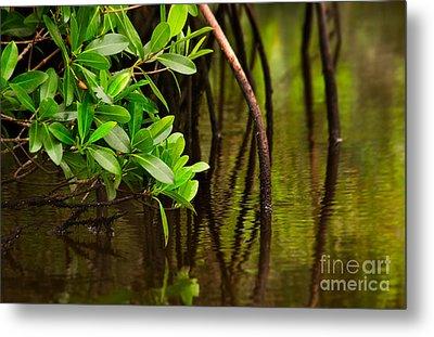 Canoeing Through Quiet Mangroves Metal Print