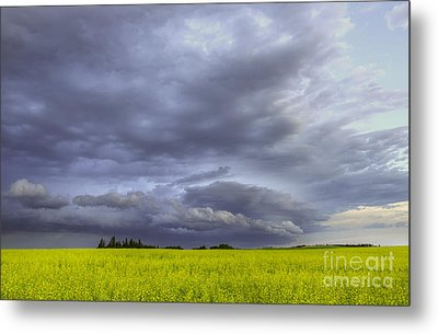 Canola And Storm Metal Print