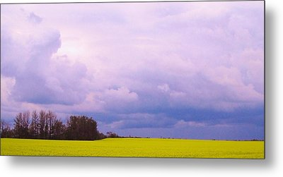 Canola Field Metal Print by Cathy Long