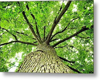 Canopy Metal Print by Greg Fortier