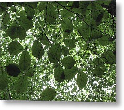 Canopy In Green 3 Metal Print