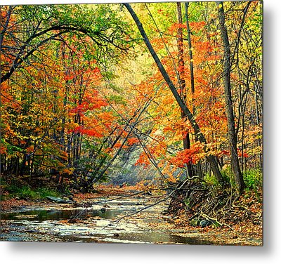 Canopy Of Color II Metal Print by Frozen in Time Fine Art Photography