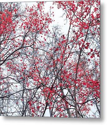 Canopy Trees Metal Print by Priska Wettstein