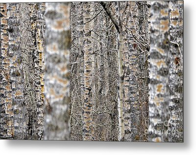 Can't See The Wood For The Trees Metal Print by Dee Cresswell