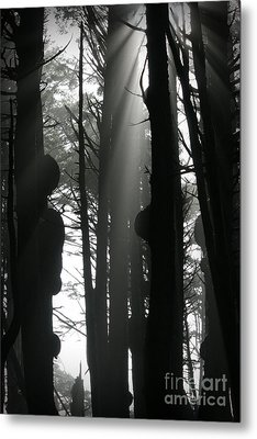 Can't See...the Forest For The Trees Metal Print by Deena Otterstetter