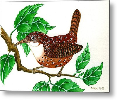 Canyon Wren Metal Print