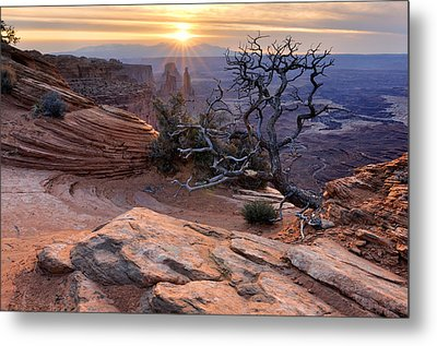 Canyonlands Sunrise Landscape With Dry Tree Metal Print by Yevgen Timashov