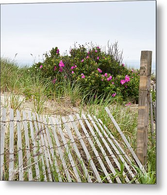 Cape Cod Beach Roses Metal Print by Michelle Wiarda