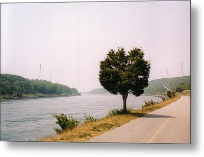 Cape Cod Canal And Tree Metal Print by David Fiske