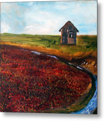Cape Cod Cranberry Bog Metal Print