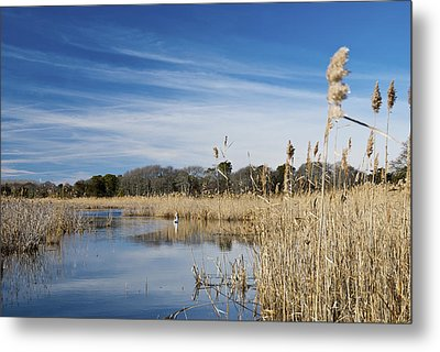 Cape May Marshes Metal Print by Jennifer Ancker
