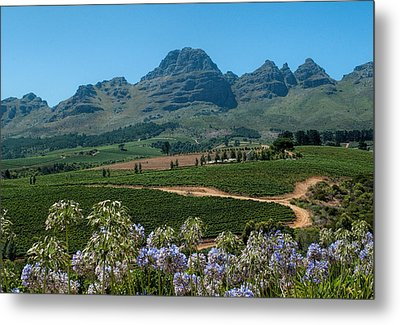Cape Winelands - South Africa Metal Print