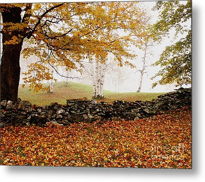 Caper Hill Birch Metal Print