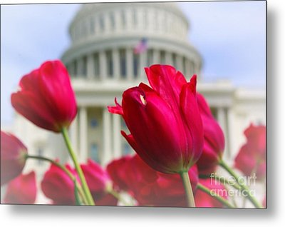 Metal Print featuring the photograph Capital Flowers  by John S