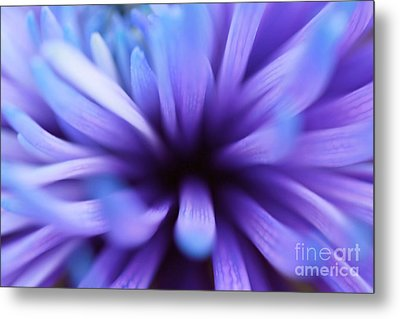Captivation Metal Print by Inspired Nature Photography Fine Art Photography