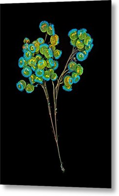 Carchesium Colony, Confocal Micrograph Metal Print by Science Photo Library