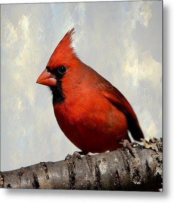 Cardinal 3 Metal Print