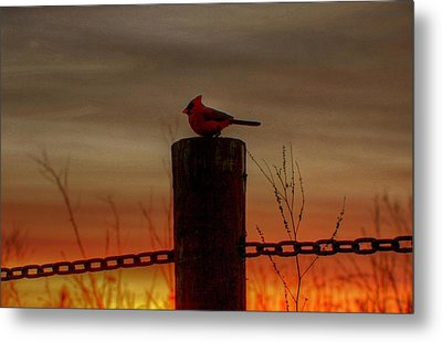 Cardinal At Sunset Metal Print by Larry Trupp