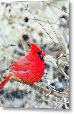 Cardinal Bird Christmas Card Metal Print