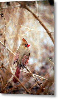 Cardinal Birds Female Metal Print