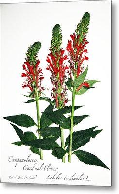 Cardinal-flower Metal Print