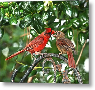Cardinal Gift Of Love Photo Metal Print