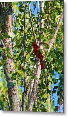 Cardinal Hidden Metal Print