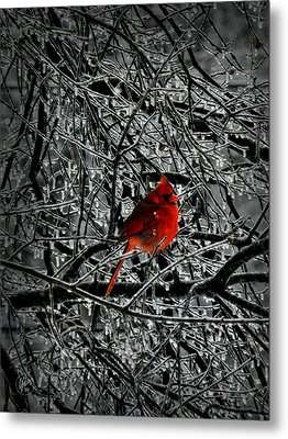 Cardinal In An Ice Storm 001 Metal Print by Lance Vaughn