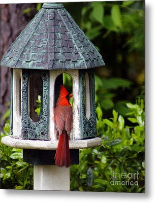 Cardinal In Bird Feeder Metal Print