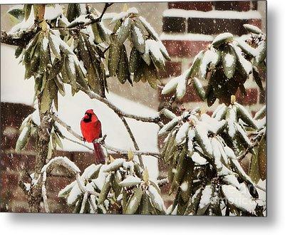 Cardinal In Snow Metal Print