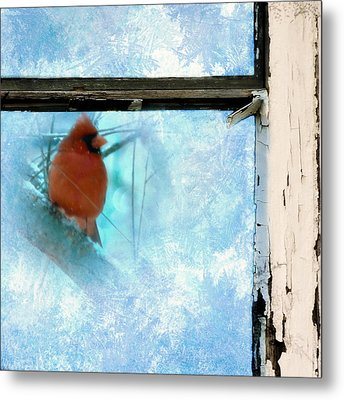 Cardinal In The Frost Metal Print