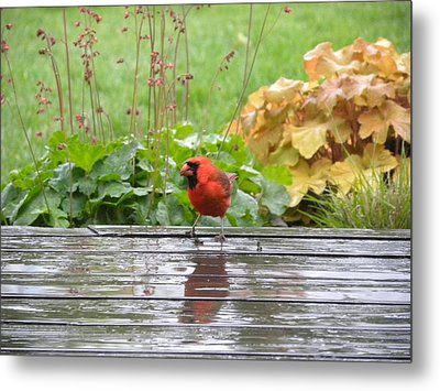Metal Print featuring the photograph Cardinal In The Rain by Teresa Schomig