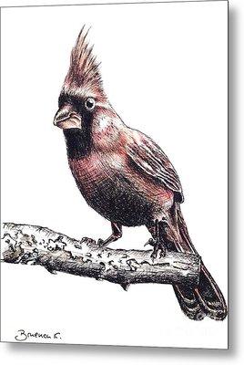 Cardinal Male Metal Print by Katharina Filus