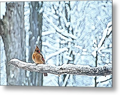 Cardinal No Mate To Keep Warm Metal Print by Randall Branham