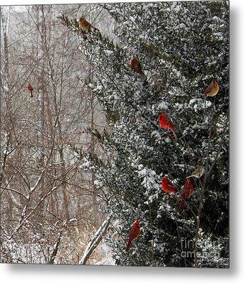 Cardinals In Winter 1 Square Metal Print