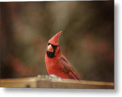 Cardinals Metal Print by Kimberly Danner