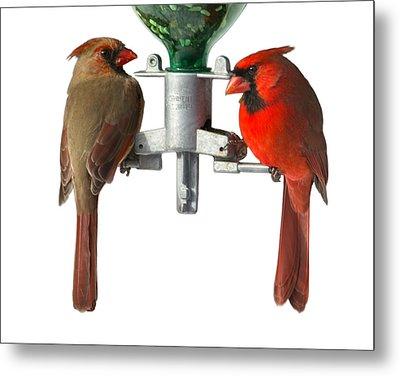 Cardinals On White Metal Print by John Kunze