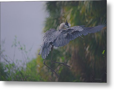 Metal Print featuring the photograph Careful Landing by Dennis Baswell