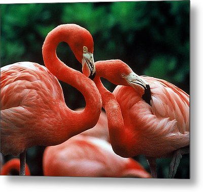 Wanna Hang Out Tonight Pinky? Metal Print