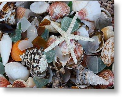 Caribbean Shells Metal Print by The Art of Alice Terrill