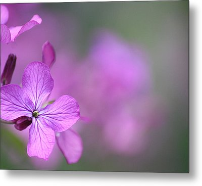 Metal Print featuring the photograph Caring by The Art Of Marilyn Ridoutt-Greene