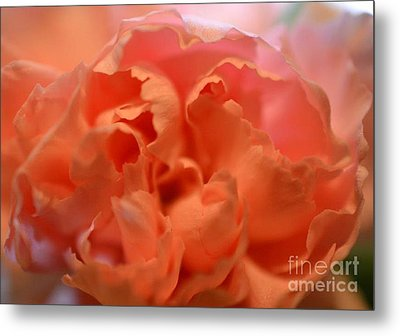 Metal Print featuring the photograph Carnation Burst by Denise Tomasura