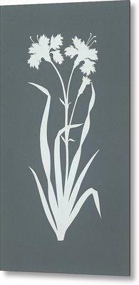 Carnation  Metal Print by Philipp Otto Runge
