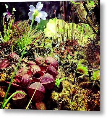 Carniverous Plants Metal Print